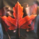Maple Leaf for Jim
